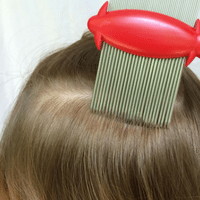 combing for lice