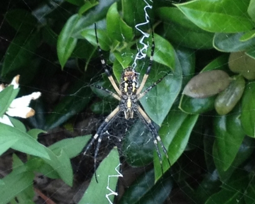 Fact or Fake: Writing Spiders are Good for your Gardens!